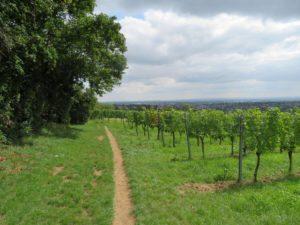 Weinwanderweg - Mauer